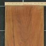 Sapodilla Log 342 Board B11
